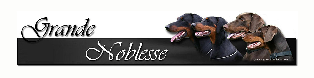 Dobermann Kennel Grande Noblesse